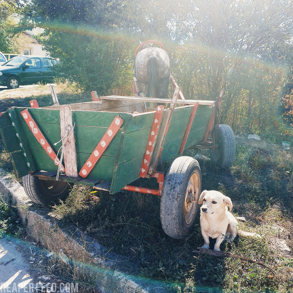 Dog and horse drawn cart at a Flea Market in Bulgaria